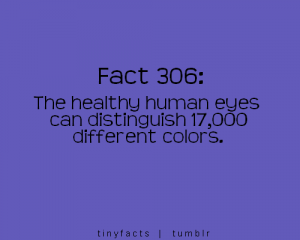 The-Healthy-Human-Eyes-Can-Distinguish-17000-Different-Colors-300x240